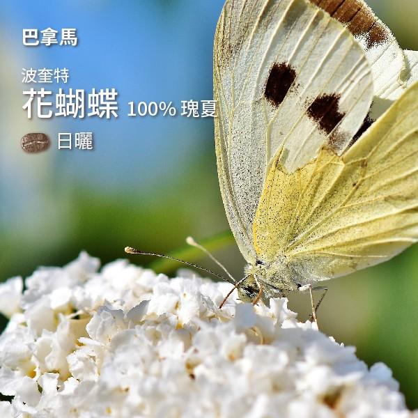 花蝴蝶 100% 瑰夏